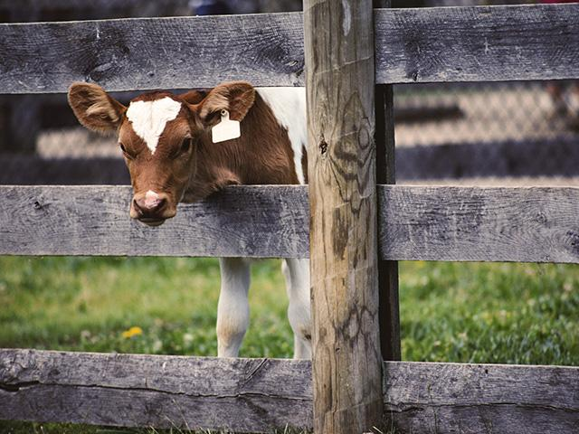 A California law sets standards for raising certain types of meat animals, which will be required of out-of-state producers who wish to sell product into the state. (DTN/Progressive Farmer stock photo)
