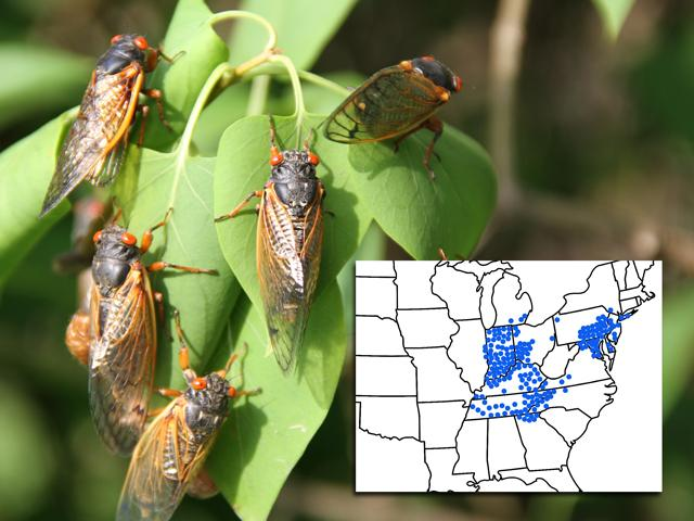 Periodical cicadas have bright red eyes and tend to show up in droves. The map indicates the historical distribution of Brood X. Volunteers are being asked to help photograph and document the insect as they emerge. (DTN photo by Pamela Smith; map courtesy of Gene Kritsky)