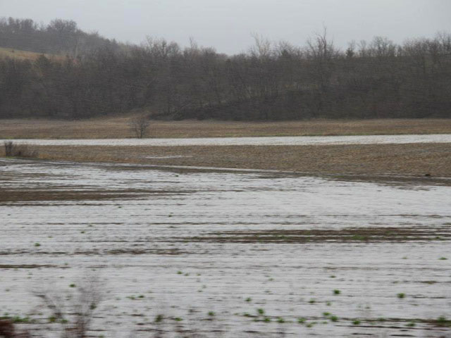 Flooding caused millions of acres to go unplanted in 2015, and growers will face tough weed populations and possible nutrient deficiencies there in 2016. (DTN photo by Elaine Shein)