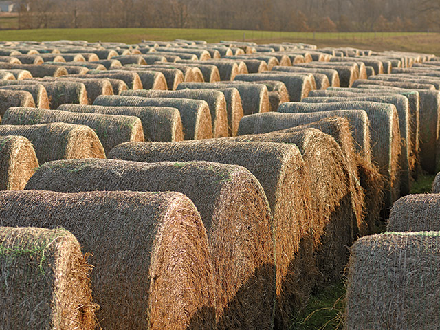 Whether or not to make round bale silage is not an easy question, but bales won't disappear anytime soon. (DTN\Progressive Farmer file photo by Jim Patrico)