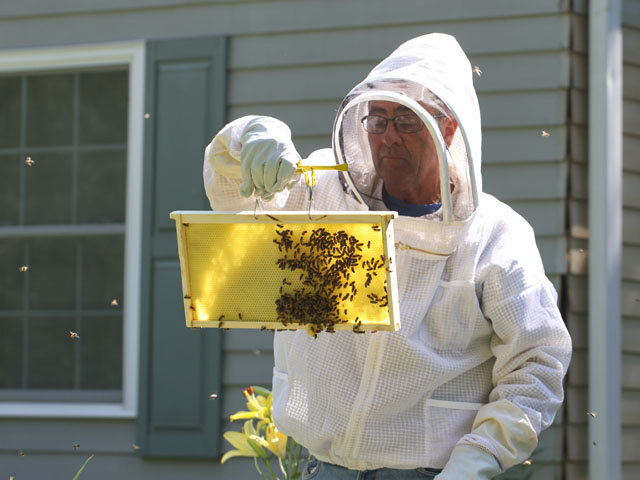 Beekeeping groups have filed a legal challenge to EPA's approval of the insecticide sulfoxaflor. (DTN/Progressive Farmer photo by Pam Smith)