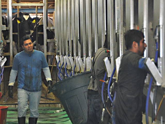 Latino workers at a New York dairy farm in 2013. Dairy farmers have been calling for immigration reform because they need permanent labor. The murder of an Iowa college student allegedly by a worker who may have falsified work documents leads to more questions about legislation around an agricultural guest-worker program. (DTN file photo by Chris Clayton)