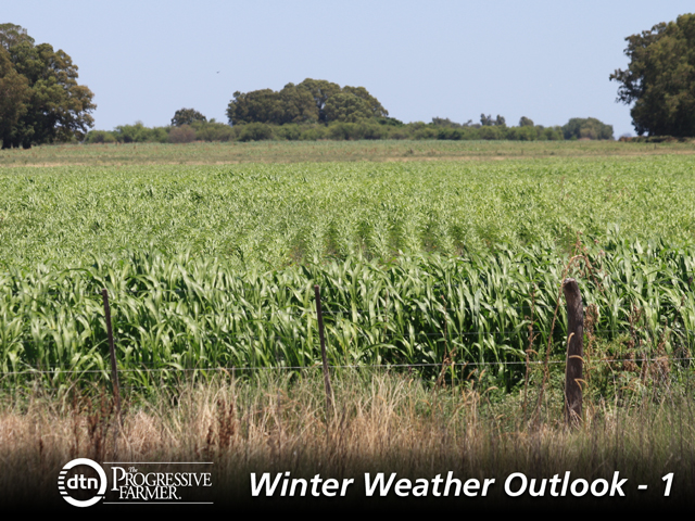 Drought threats to Argentina's corn crop appear to have a very low probability of occurring this season. (DTN file photo by Alastair Stewart)
