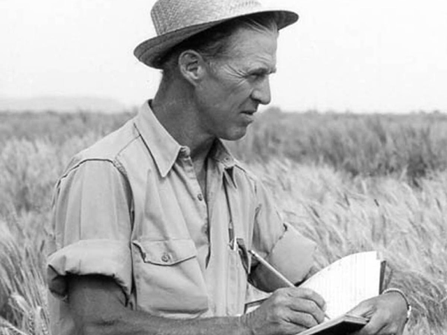 One of the most iconic images of Nobel Peace Prize Laureate Norman Borlaug (1914-2009). Borlaug's legacy is often debated by critics of the Green Revolution. A new documentary on PBS looks at Borlaug's work and life. (Photo courtesy of USDA)