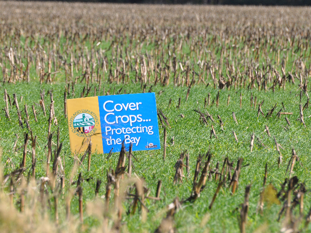 USDA on Thursday announced $72.3 million in Environmental Quality Incentive Program (EQIP) funding to target soil health and nutrient stewardship, such as promoting cover crops. (DTN file photo by Chris Clayton)