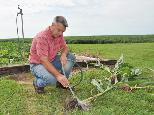 Growers like Illinois farmer David Brown will be encouraged to scout and report Bt corn failures to seed companies promptly, after the EPA finalized new rules for the management of rootworm resistance. (DTN photo by Emily Unglesbee)