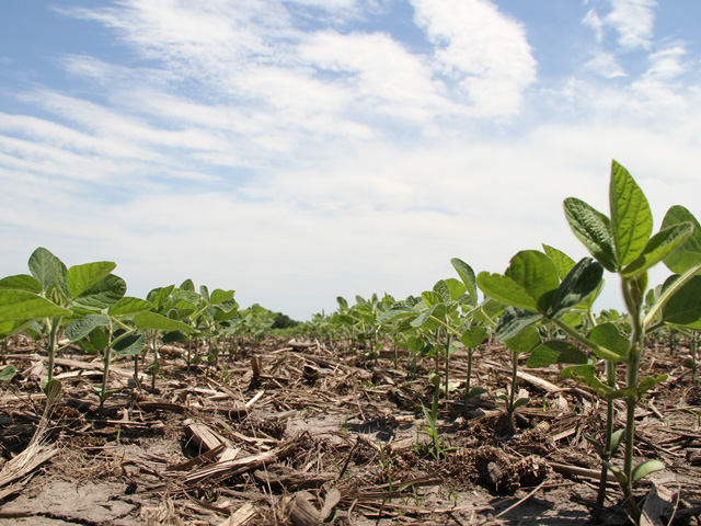 You're better off spending money on more herbicide modes of action than dumping another 10,000 soybean seeds per acre, Wisconsin agronomist Shawn Conley says. (DTN photo by Pamela Smith)