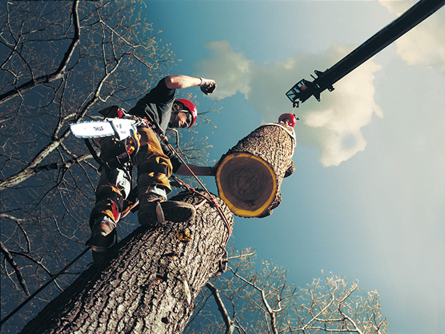 Mark Chisholm is a third-generation arborist. Patience and proper equipment are key to safely cutting down a tree. The worst decision? Using a ladder to cut down any tree, he says. (Progressive Farmer photo supplied by STIHL)