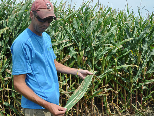 Illinois farmer Adam Watson examines northern corn leaf blight in his fields in 2014. Wet weather this June has allowed the disease to surface in corn fields once again this summer. (DTN photo by Emily Unglesbee)