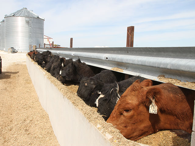 The U.S. beef herd is entering its fourth year of expansion in 2017. (DTN photo by Pamela Smith)