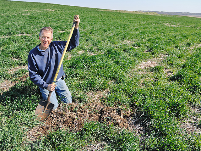 Cereal rye cover crops, combined with a commitment to no-till farming, are producing measurable results on the Berger farm, in southeast Iowa. (Progressive Farmer photo by Jim Patrico)