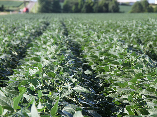 A clean field of soybeans near Boody, Illinois. As the growing season continues, trade remains the hot topic for soybeans. This week, members of the Iowa Soybean Association have been in Europe talking about the prospects for more sales. (DTN file photo by Pam Smith)