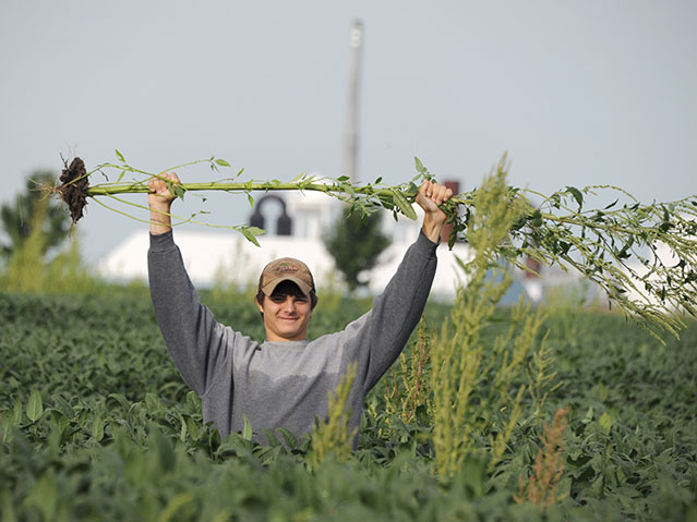 Bean walker Ziak Ireland celebrates his victory over a whopper waterhemp plant found in a soybean field near Mt. Zion, Illinois. (DTN photo by Pamela Smith)