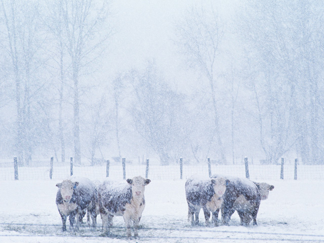 Several factors add to the concerns for cattle when temperatures drop. Wind and moisture are the biggest factors in how much care is needed. (DTN\The Progressive Farmer file photo)