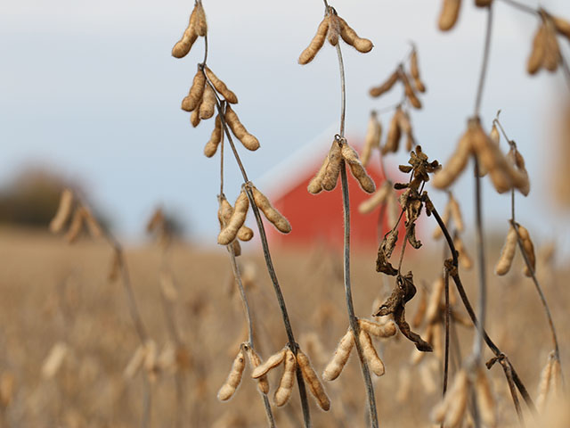 Did your beans suffer from sudden death syndrome, white mold or other diseases in 2015? Time to plan ahead for 2016. (DTN photo by Pamela Smith)