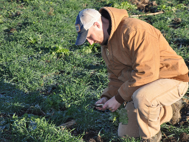 Nick Goeser, director of the Soil Health Partnership for NCGA, examines some cover crops. (DTN photo by Chris Clayton)