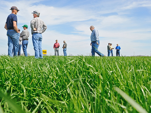 The Alliance for Grassland Renewal helps beef producers convert pastures to nontoxic grasses. (DTN/Progressive Farmer photo by Jim Patrico)