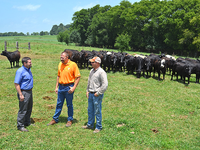 Tennessee Extension specialists want to model a heifer development program producers in the region can use to grow herds and improve profits. (DTN/Progressive Farmer photo by Victoria G. Meyers)