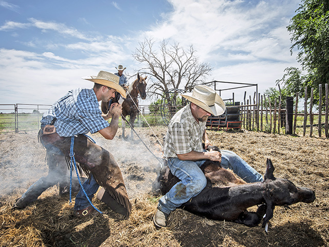 Branded cattle are more difficult for thieves to sell and are often recovered by law enforcement. (DTN/Progressive Farmer photo by James Pratt)