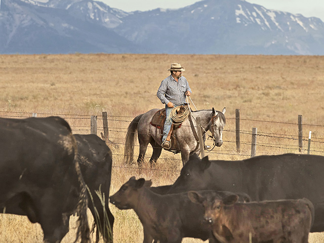 "Todd Nash has hired a ""range rider"" to check cattle and look for predators. Nash runs cattle on 60,000 acres of public and leased land near Enterprise, Ore. (DTN/Progressive Farmer photo by Scott Baxter)"