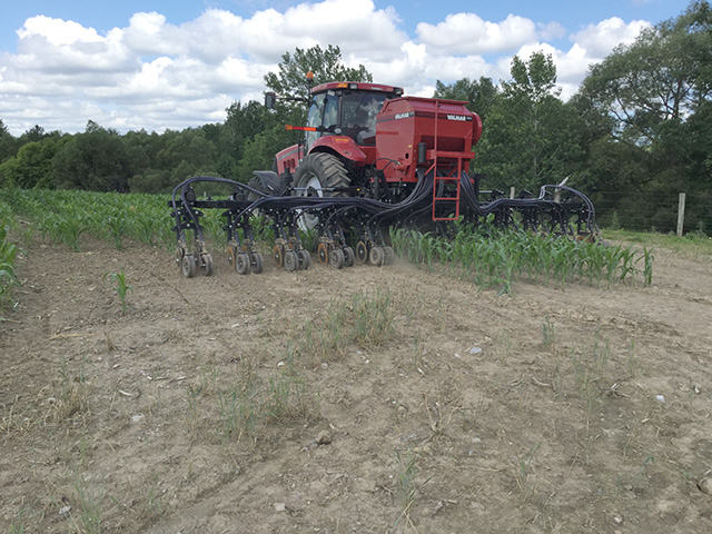 Seeding cover crops into standing corn helped New York growers get a jump on the fall season last year. Timely planting is critical in northern climates in particular. (Photo courtesy of Jonathon Martin)