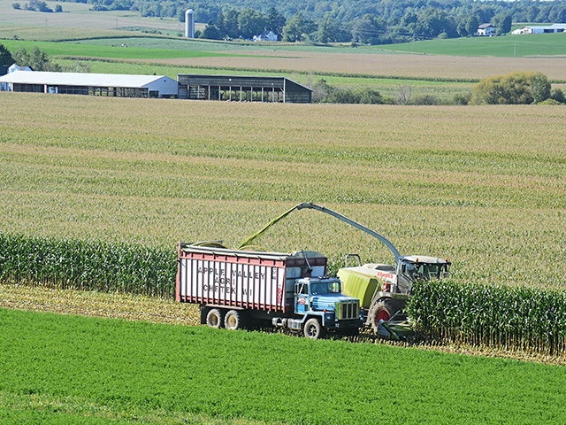 When silage is cut has a large effect on the nutrients in the feed, according to Allen Stateler, nutritionist for Nutrition Services Associates based in northeast Nebraska. (DTN/The Progressive Farmer file photo by Rick Mooney)