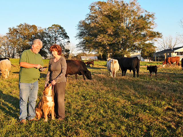 James and Barbara Strickland move their cow herd daily using a system of paddocks created with electric tape. (DTN/Progressive Farmer photo by Becky Mills)