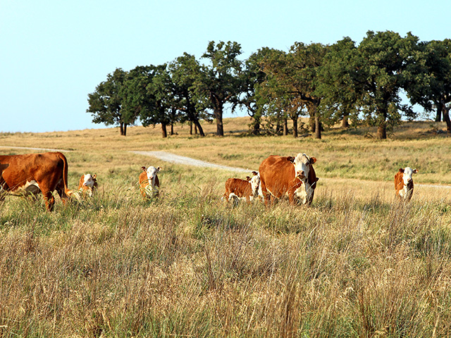 With an extremely dry winter in much of the Southern Plains this year, the margin for error for forage production in 2018 will be fairly small if the dryness continues. (DTN/The Progressive Farmer photo by Karl Wolfshohl)