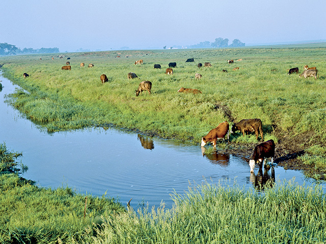 Tracking cattle movement with GPS collars shows they do not spend as much time in stream water as might be expected. (Progressive Farmer image by Grant Heilman)
