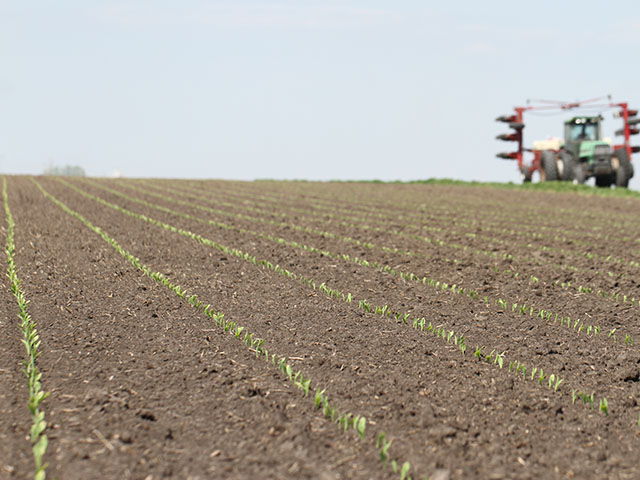 Corn planted last week in central Illinois has spiked and is off to a good start. (DTN photo by Pamela Smith)