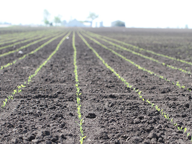 Corn is off to a fast start such as in Illinois with 46 percent of the crop already emerged. A very cool pattern this week bears watching for possible stress. (DTN photo by Pam Smith)