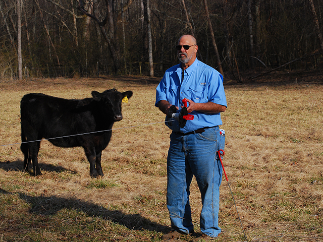 Mike Jones divides pastures into quarter-acre paddocks, using single-strand polywire fencing. Cattle are moved once or twice a day. (DTN/Progressive Farmer photo by Mike Jones)