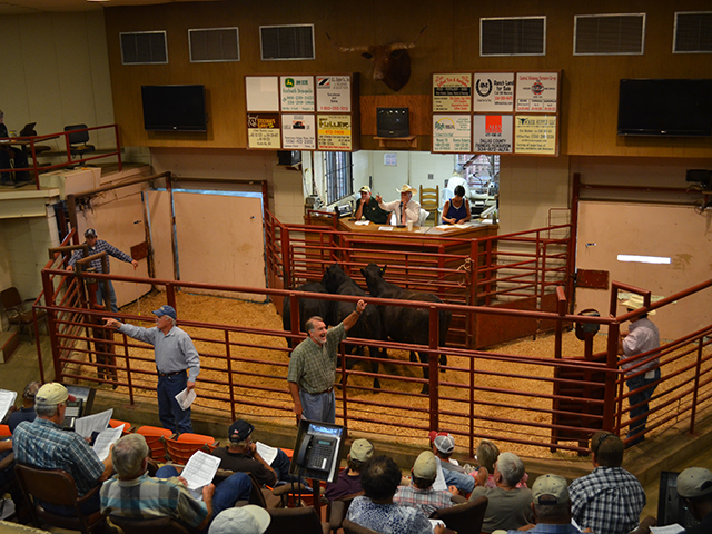Producers who buy and sell cattle online would see the same protections as those using fixed facility auctions if a new amendment to the Packers and Stockyards Act passes. (DTN/PF photo by Victoria G. Myers)