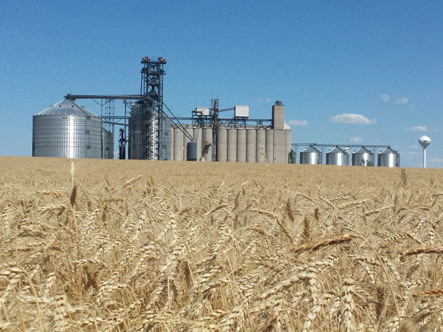 A hard red winter wheat field next to Oahe Grain Elevator in Onida, South Dakota, waits to be harvested. (Photo courtesy of Tim Luken, Oahe Grain Elevator manager)