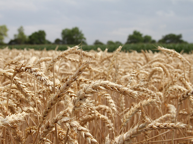 Summer will be here before you know it! Take the time now to submit your wheat field into the second annual National Wheat Yield Contest. (DTN photo by Elaine Shein)