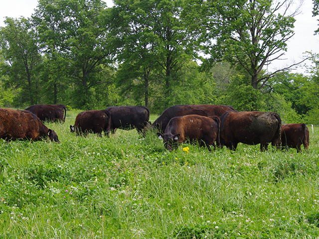 Pasture diversity helps mitigate toxicosis, which is caused by grazing endophyte-infected fescue. (DTN/Progressive Farmer image by Barb Baylor Anderson)