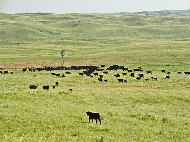 Management of 22,000-acre ranch reflects the Beel family's reverence for fragile Sandhills. (Progressive Farmer photo by Jennifer Beel)