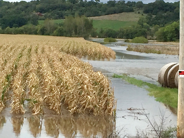 This flooded cornfield in southeastern Minnesota was one of many affected by heavy rains that fell in parts of the Upper Midwest in late September. (Courtesy photo by Jeff Littrell, Chatfield, Minnesota)