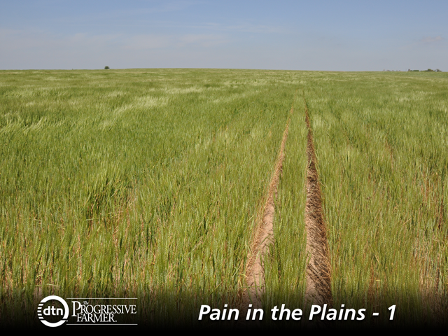 Record crop production and the lowest wheat prices in decades is leading to farmers on the Plains to look for options on how to survive financially. (DTN file photo)