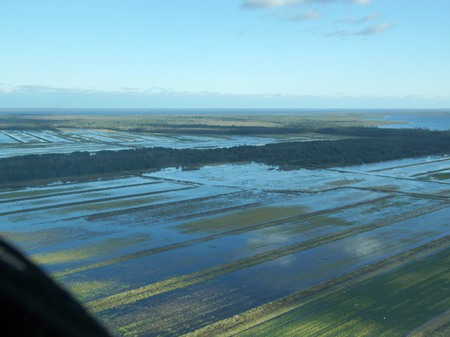 Hurricane Matthew flooded these fields in Tyrell/Washington County, North Carolina, last week. (Photo courtesy of Todd Boyd, Pinetown, North Carolina)