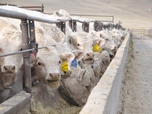 GlobalVetLINK announced all current and transition Veterinary Feed Directive (VFD) drugs now are active in its electronic system. (DTN/Progressive Farmer photo by Boyd Kidwell)