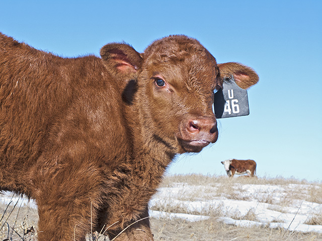 Colostrum replacers and electrolytes are the go-to solutions for at-risk calves. (DTN/Progressive Farmer photo by Sam Wirzba)