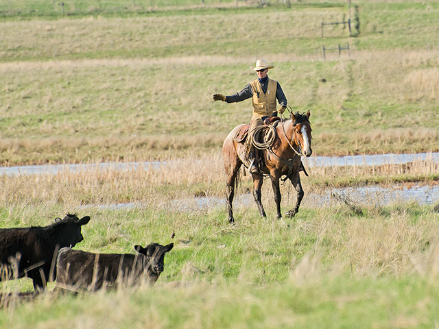 Conservation plus cattle help preserve this stopover for migrating waterfowl in South Dakota's Prairie Pothole Region. (DTN/Progressive Farmer photo by Martha Mintz)