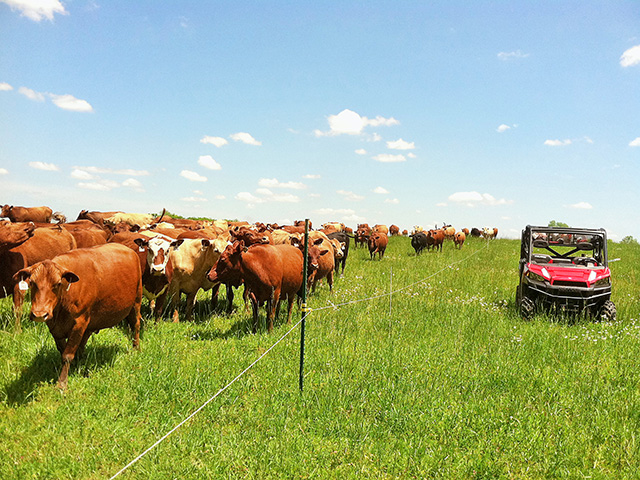 Cattle can revitalize soils and awaken productivity lost in a monoculture environment. (Photo courtesy Allen Williams)