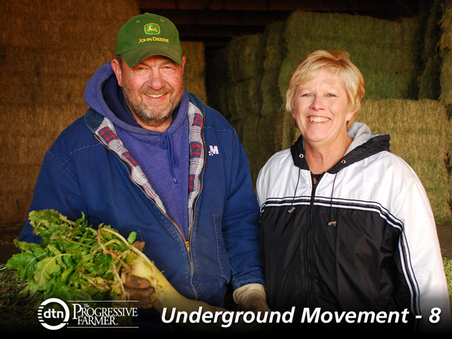 Jerry and Nancy Ackermann use cover crops and alfalfa to boost productivity. This full-season radish was from a prevented-plant year. (DTN/The Progressive Farmer photo by Susan Winsor)