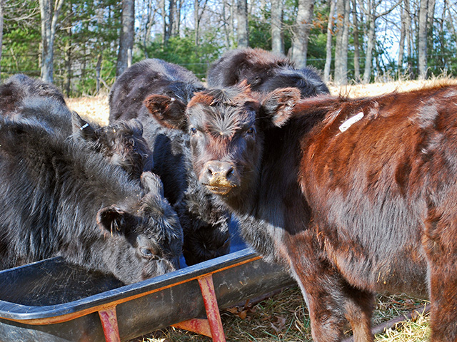 Some minerals now require a Veterinary Feed Directive for purchase. (DTN/Progressive Farmer photo by Boyd Kidwell)