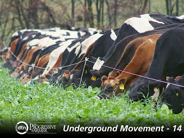 The soil-boosting diversity of cover-crop mixes can be alluring, but they can further complicate grazing opportunities. (DTN/Progressive Farmer photo by Mark Parker)
