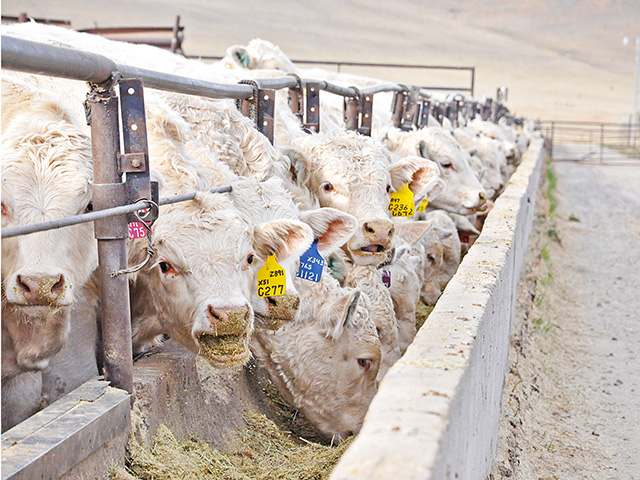 Breakevens for feedlots have corrected themselves, setting the table for significant profit potential.(DTN/Progressive Farmer photo by Chris Clayton)