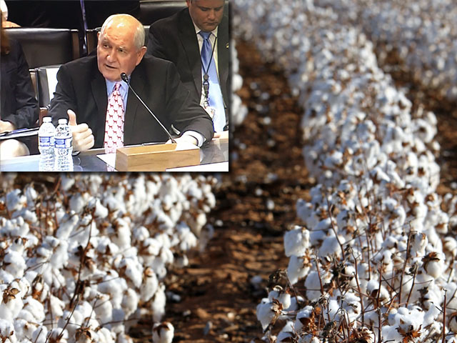 Ag Secretary Sonny Perdue, testifying at a hearing earlier this year, said damages to cotton and cattle from Hurricane Harvey could reach $1 billion in economic losses.