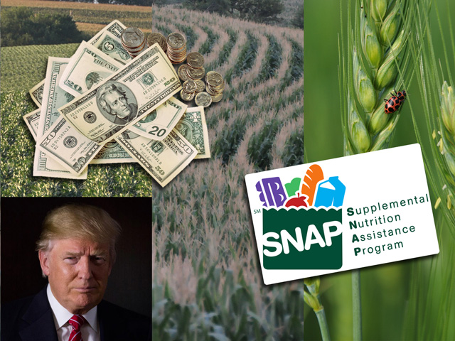 USDA plans to release timelines in the coming weeks on the implementation of the farm bill. (DTN photo illustration)